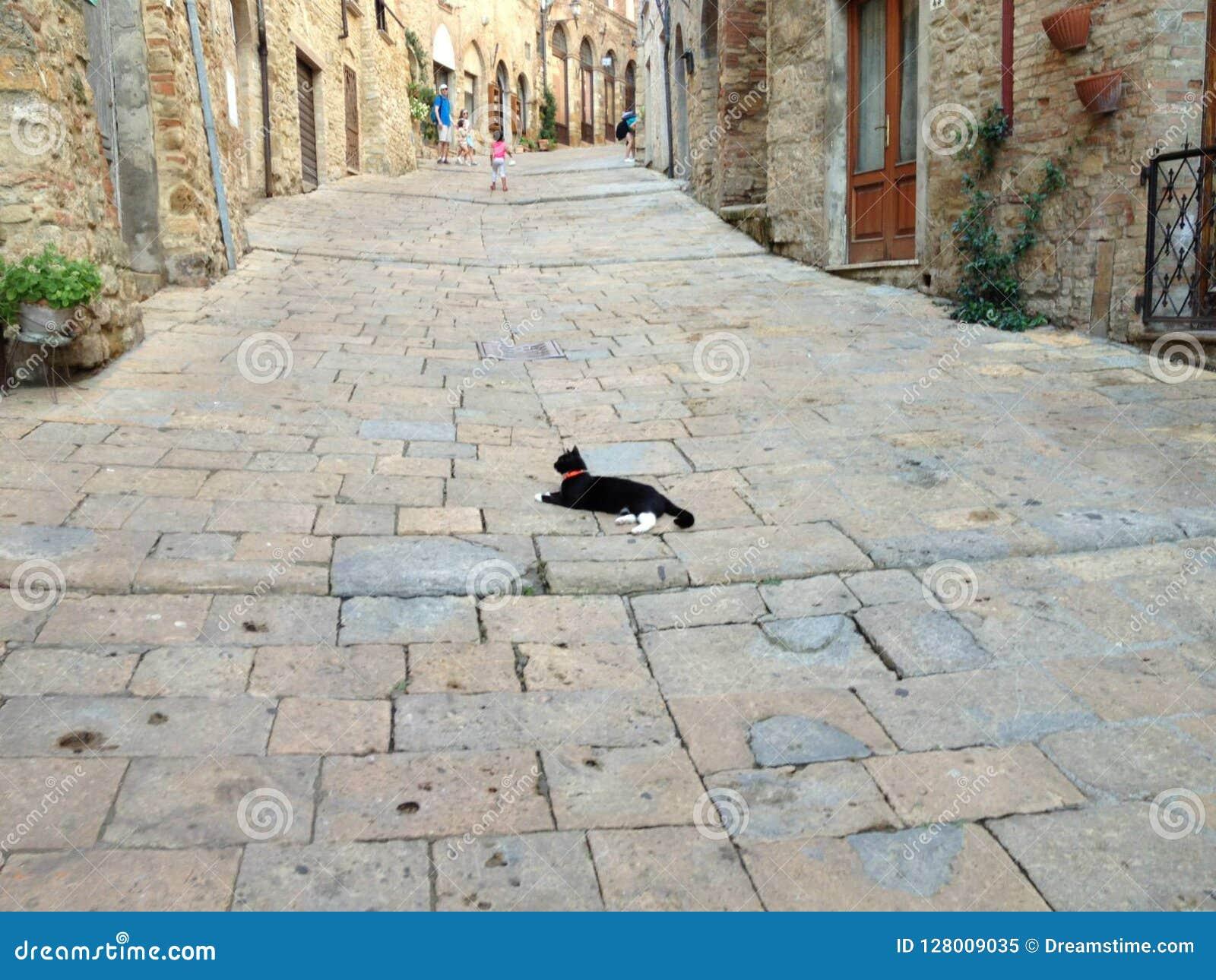 Kot w Volterra