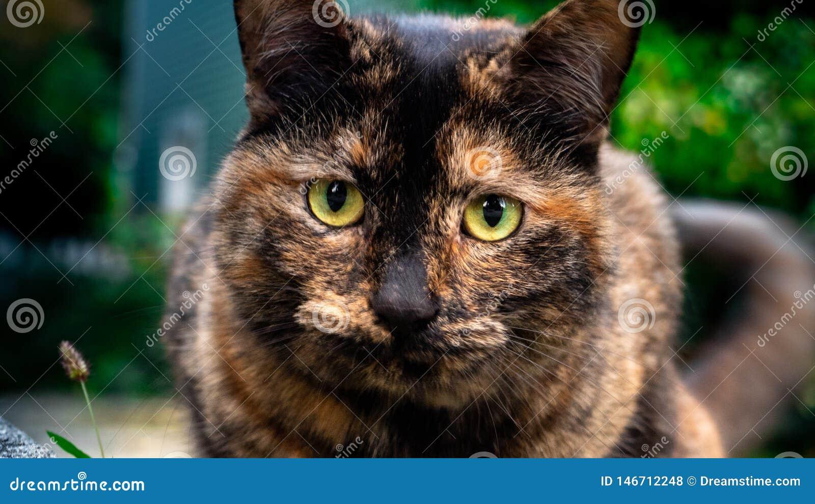 Kot zamknięty w górę rozmytego tła z