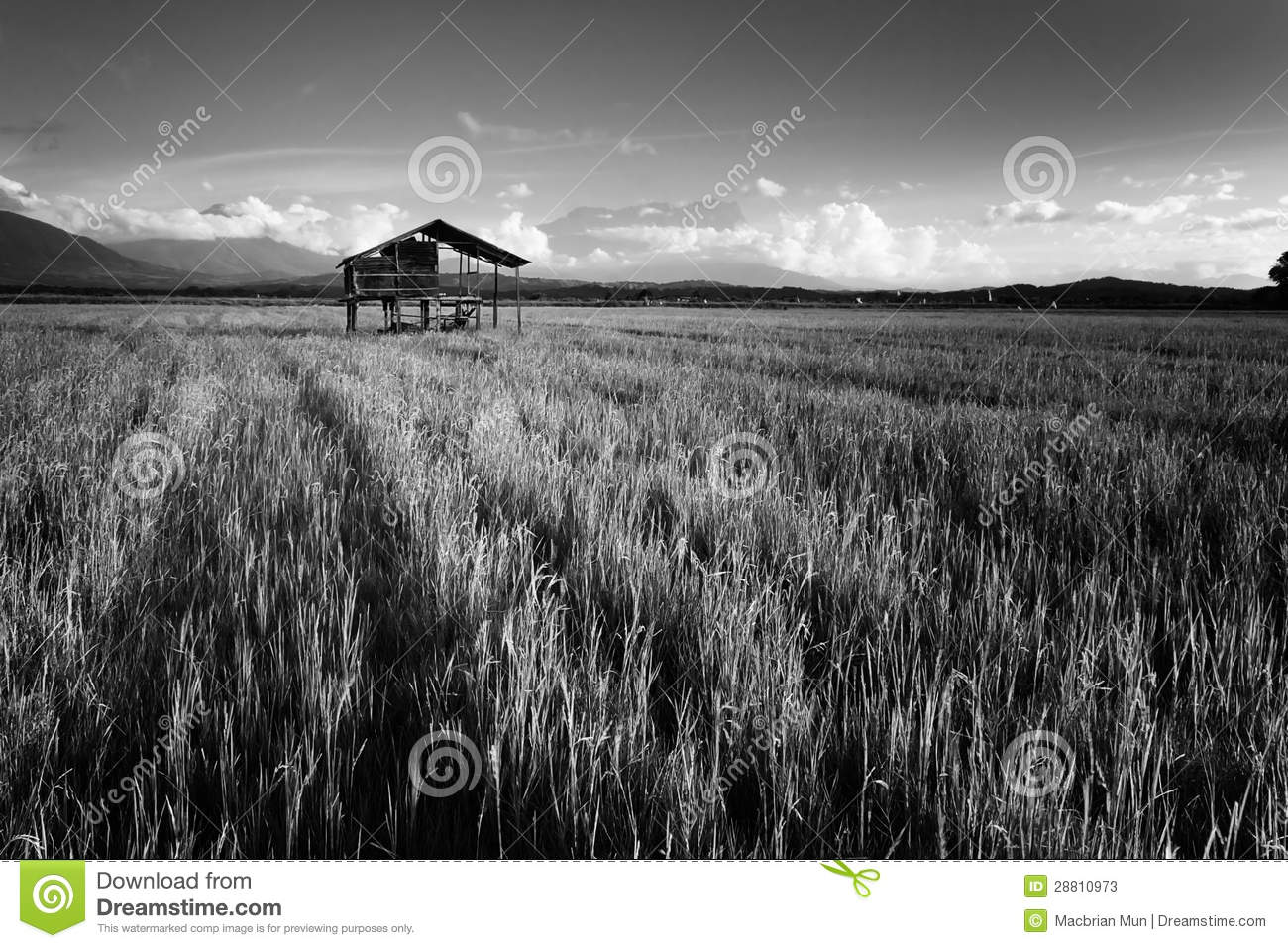Kota Belud Malaysia  city pictures gallery : Paddy field in black and white at Kota Belud, Sabah, Borneo, Malaysia.