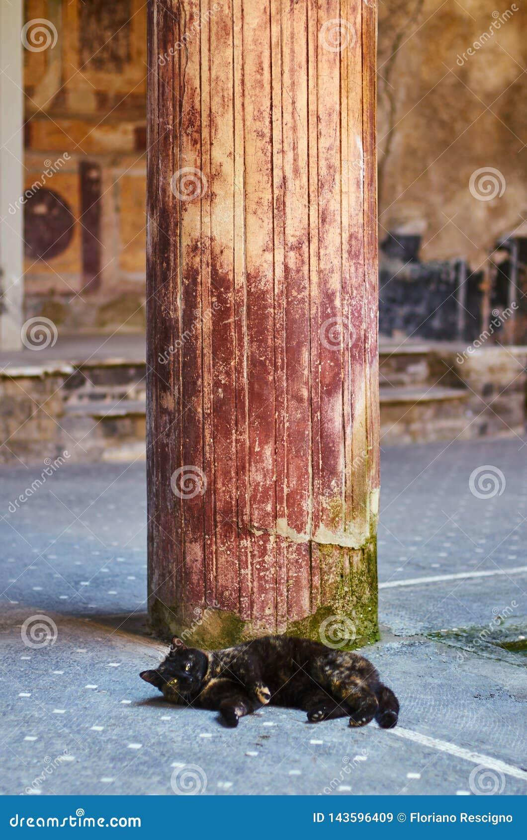 Kota dosypianie pod kolumną antyczny rzymianina dom w Pompeii
