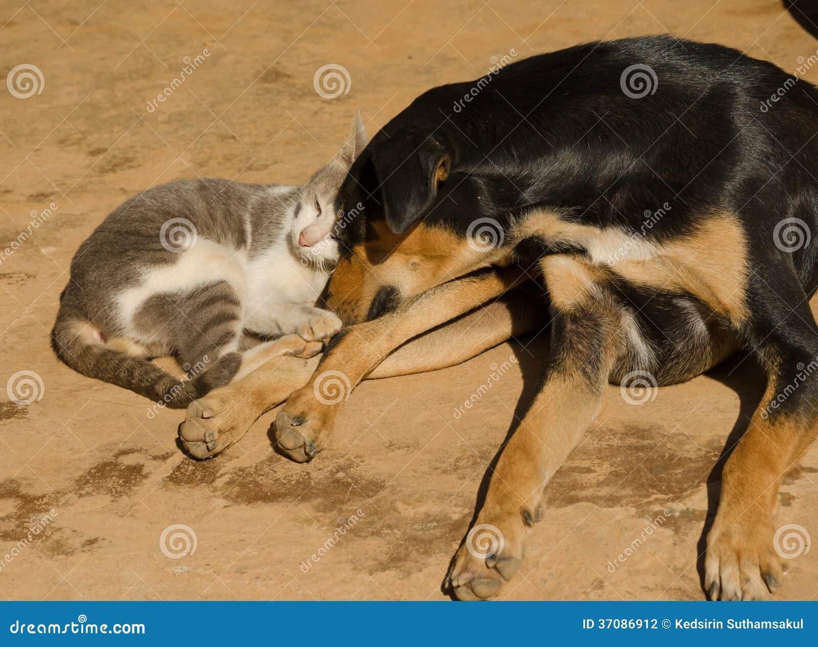 Download Kota I Psa Dosypianie Na Podłoga Zdjęcie Stock - Obraz złożonej z błękitny, łóżko: 37086912