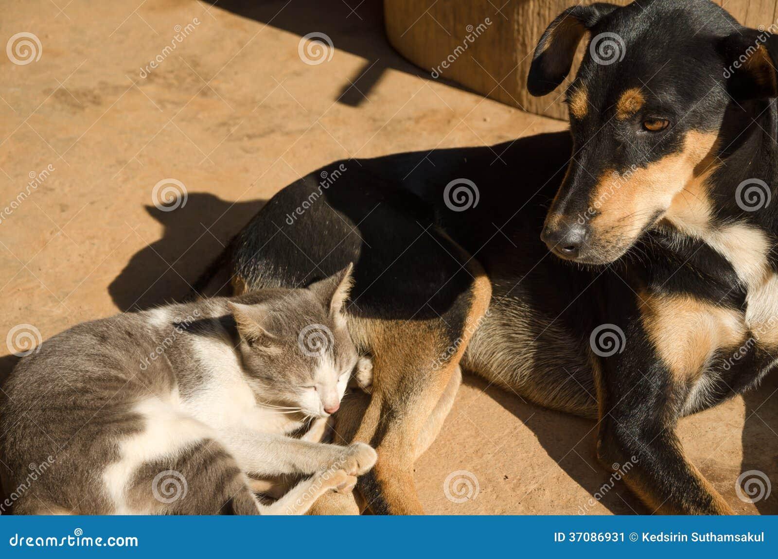 Download Kota I Psa Dosypianie Na Podłoga Obraz Stock - Obraz złożonej z zwierzę, kiciunia: 37086931