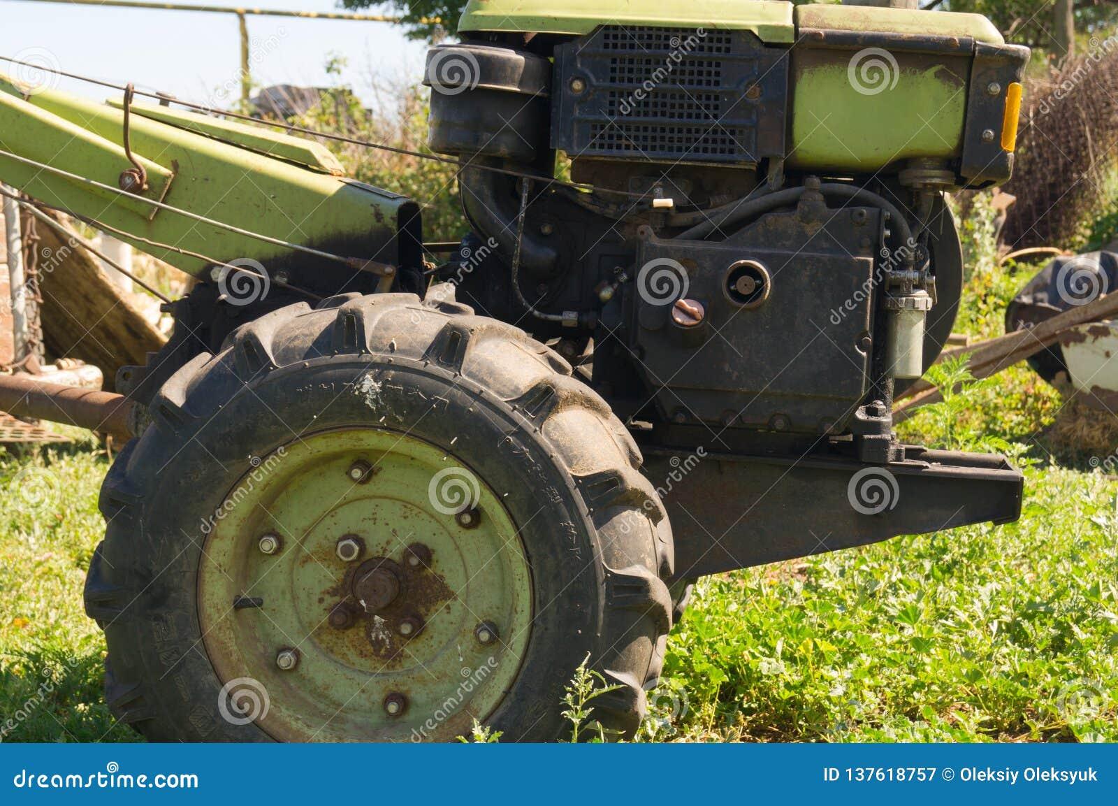 Kota kraju krowy figlarki życie ciągnik Ukraina