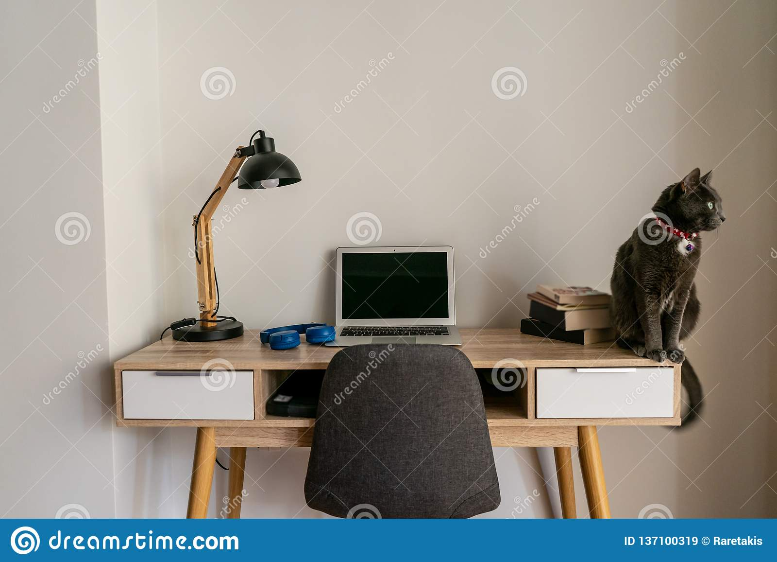 Kota obsiadanie na ministerstwo spraw wewnętrznych biurku