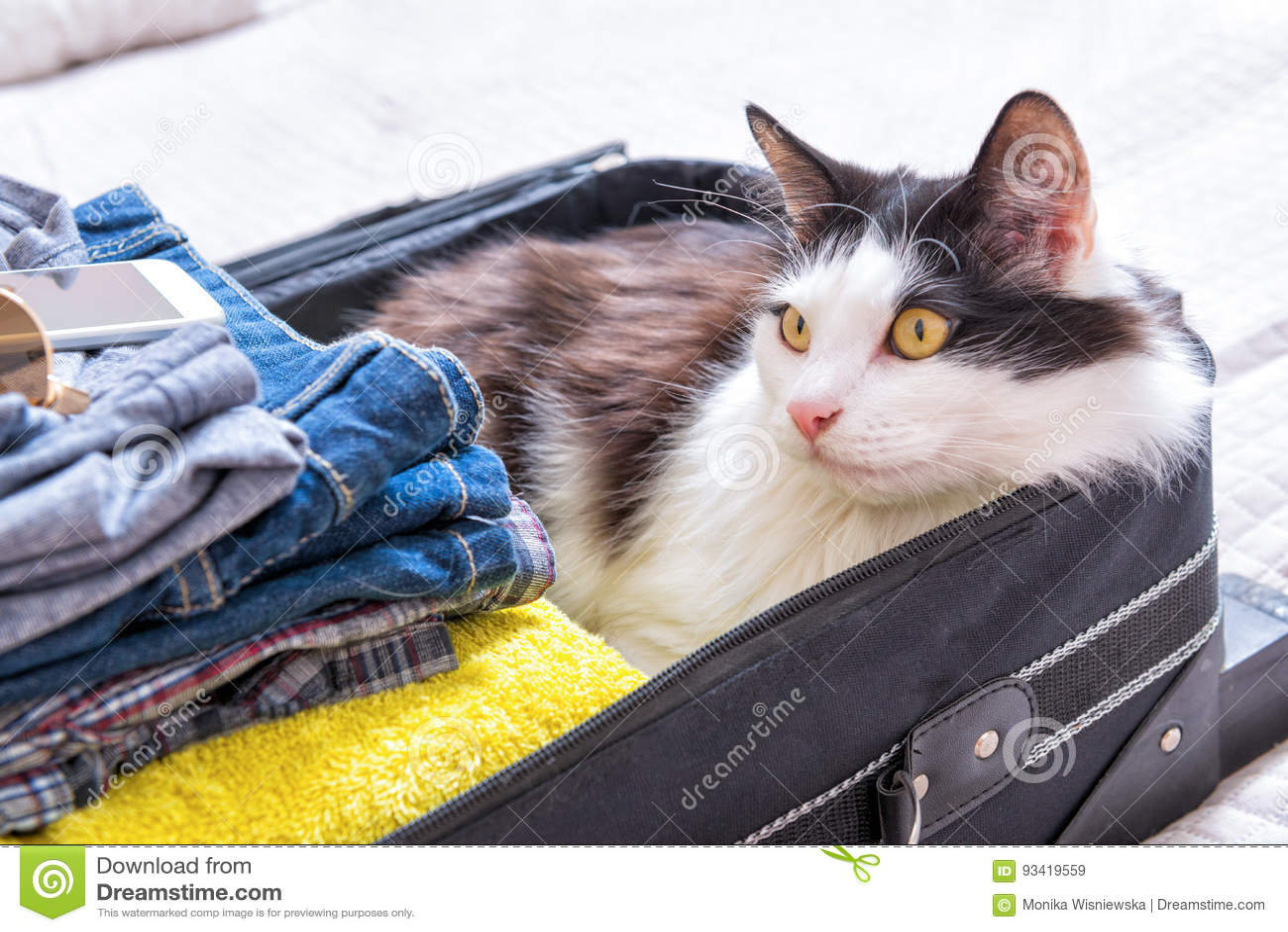 Kota obsiadanie w walizce