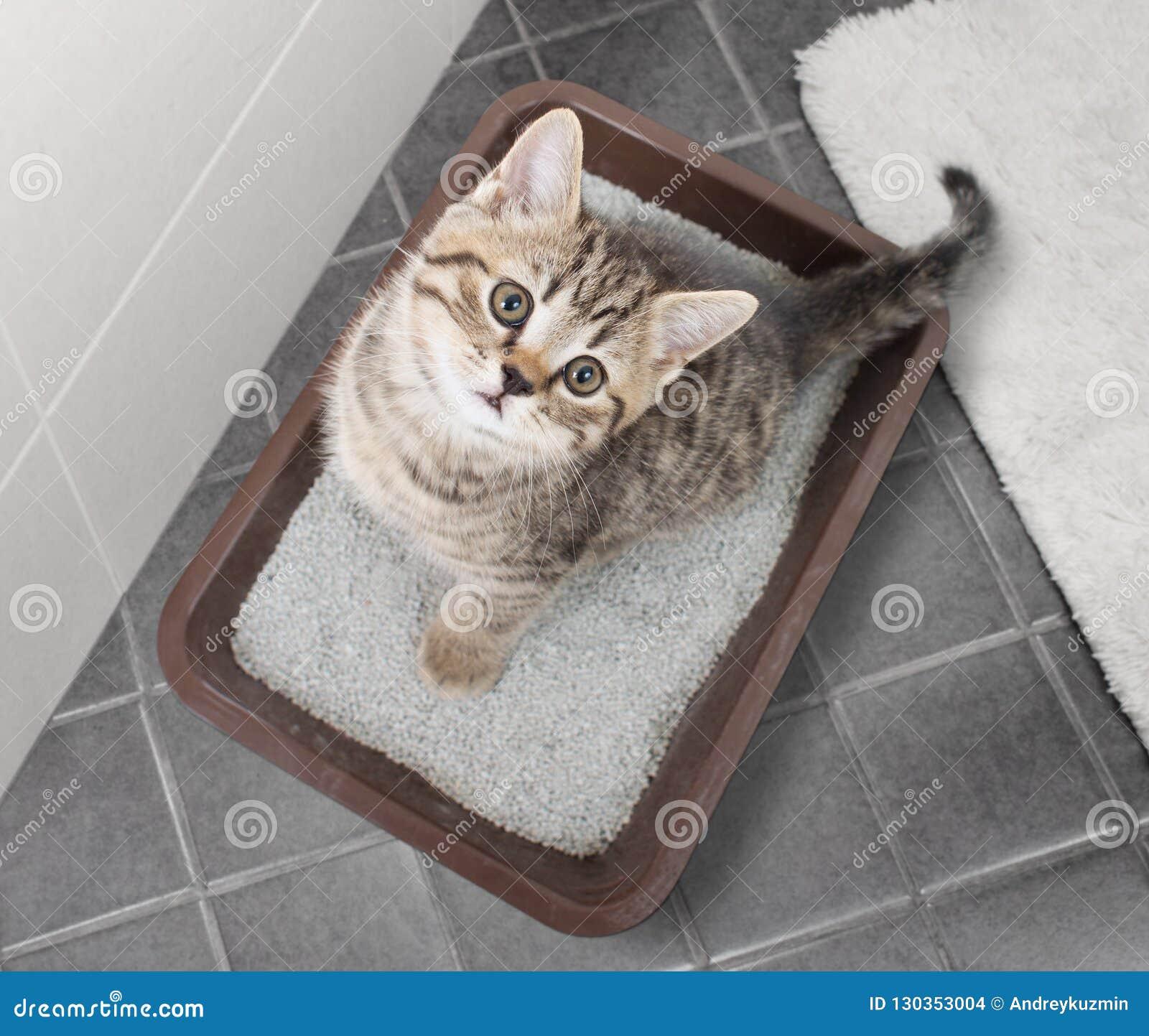 Kota odgórnego widoku obsiadanie w ściółki pudełku na łazienki podłoga