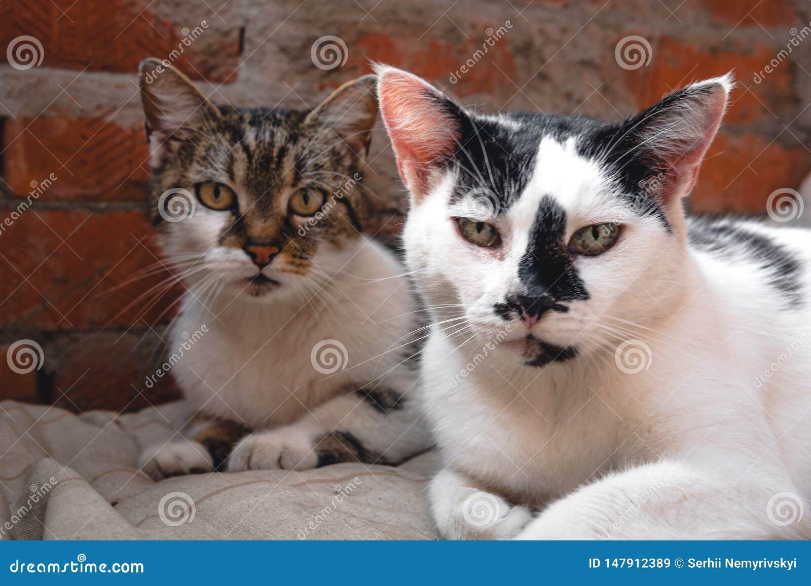 Kota ojciec i matka kot, uliczni koty