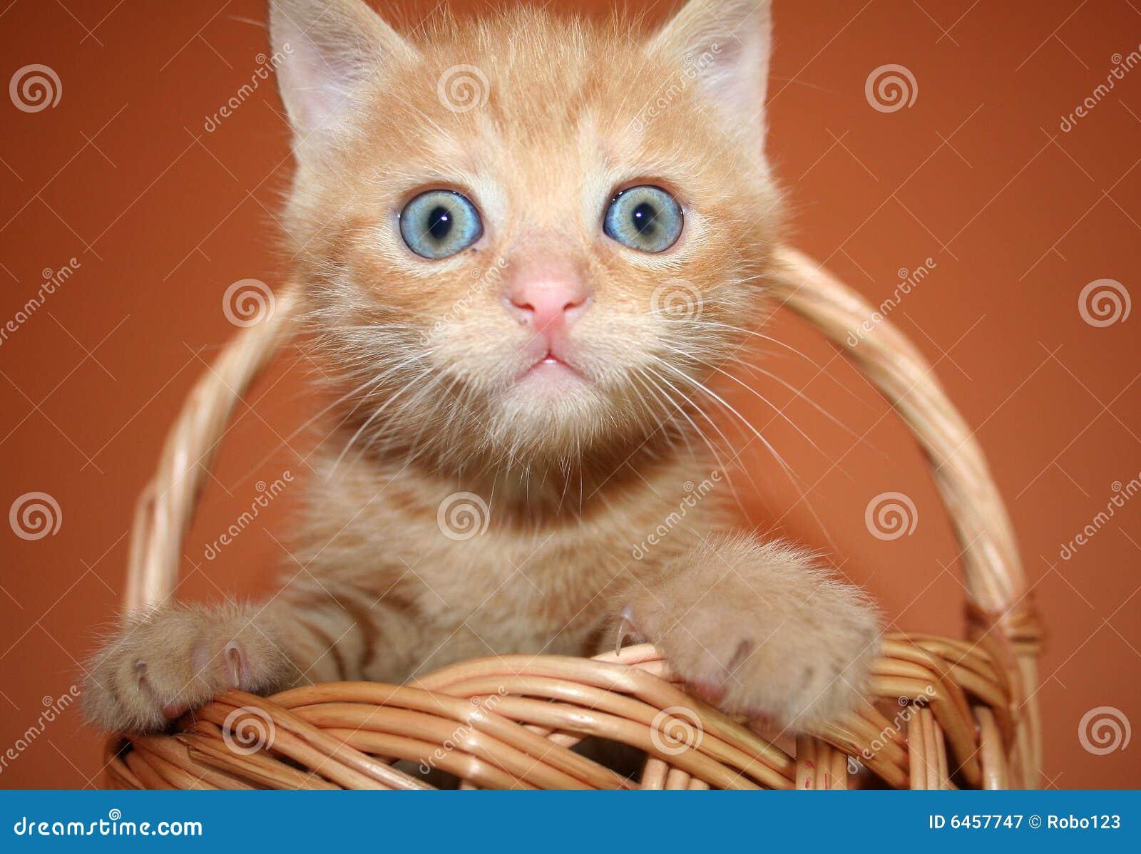 Kotek koszykowa