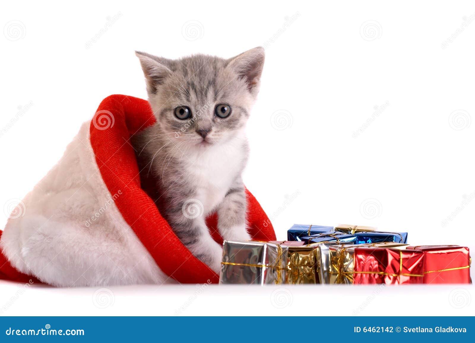 Kotek tła grać white
