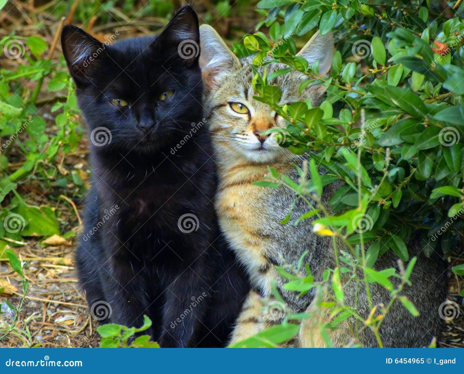 Kotki dwa