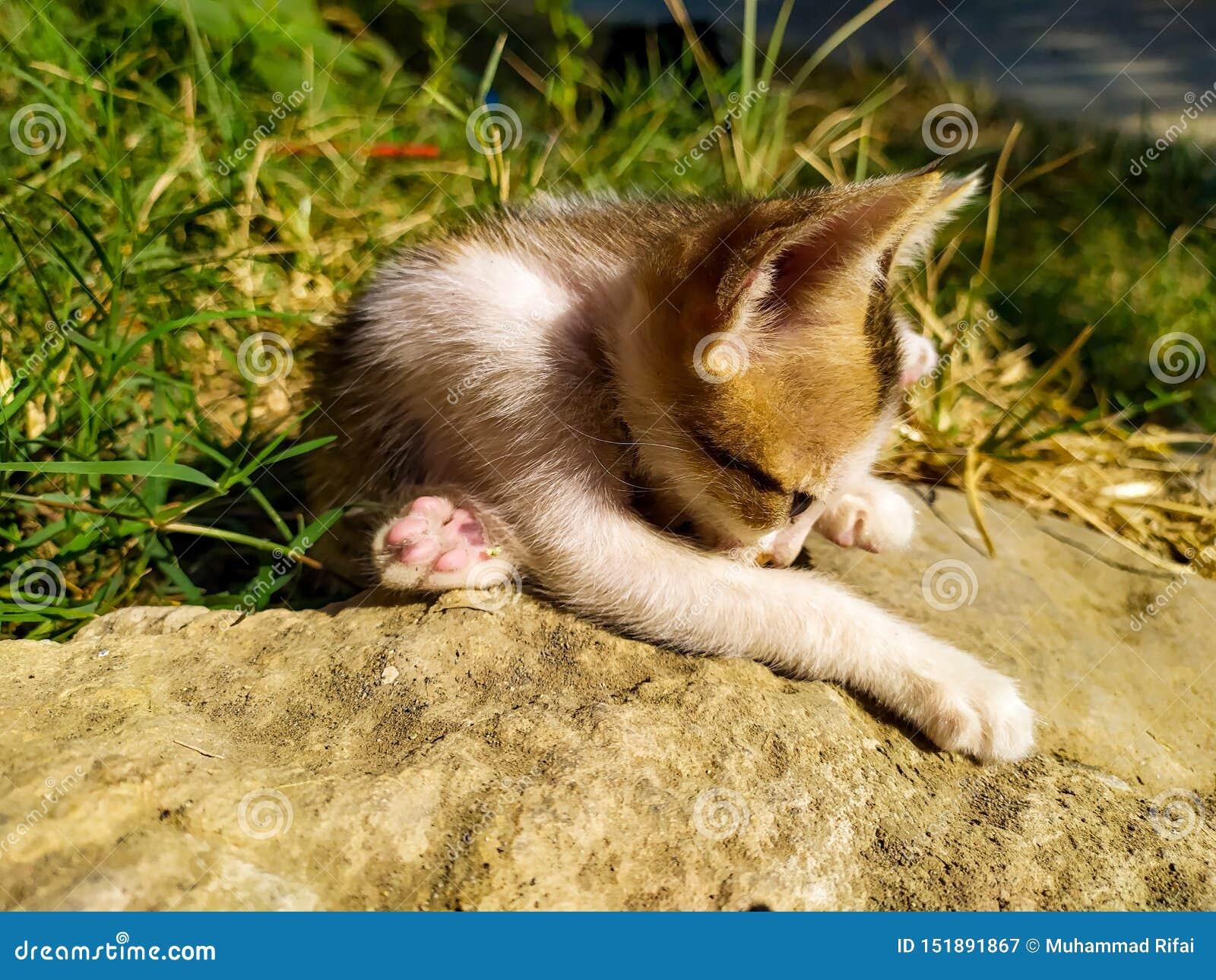 Koty bawić się na trawie