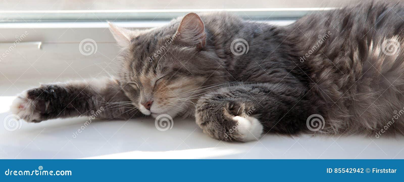 Koty szczęście