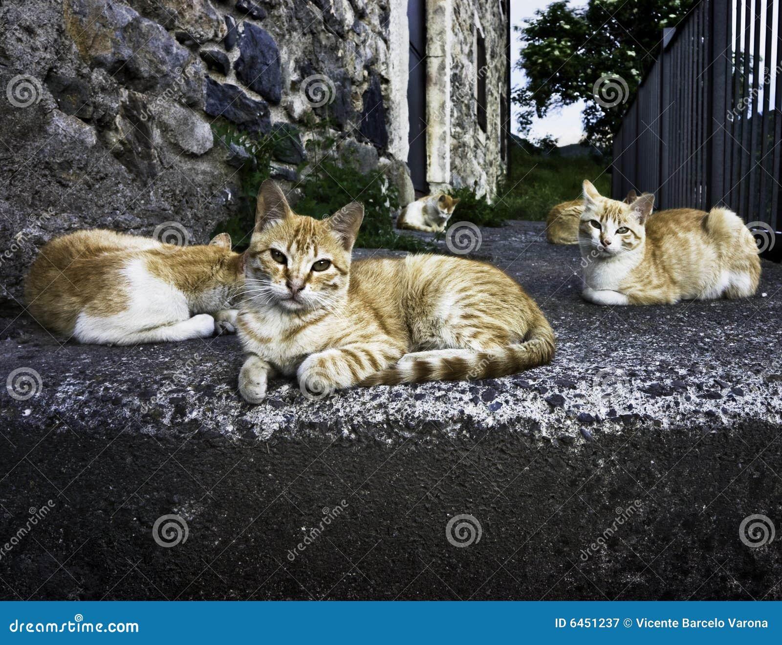 Koty ulic