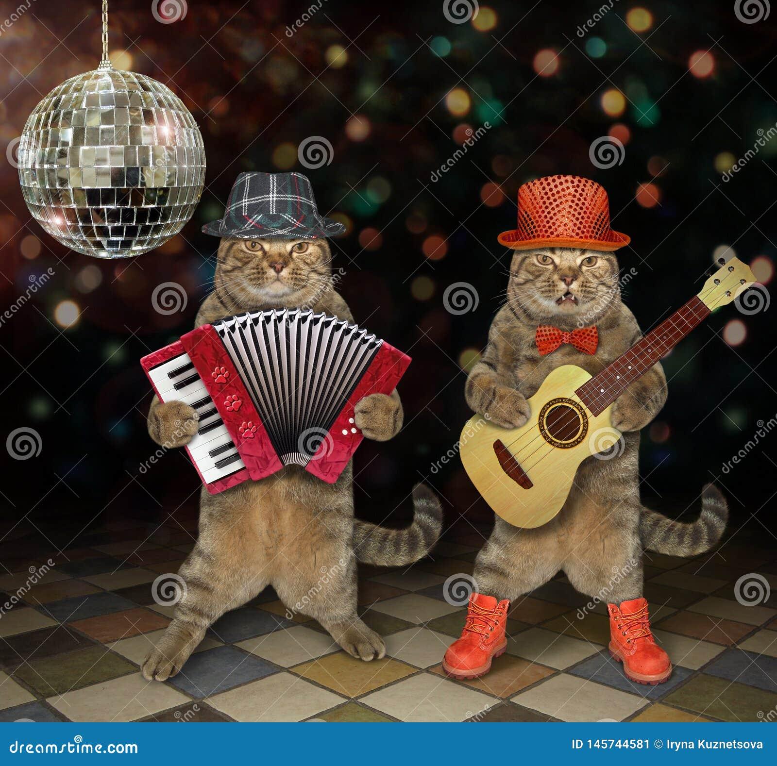 Koty wykonują w klubie nocnym