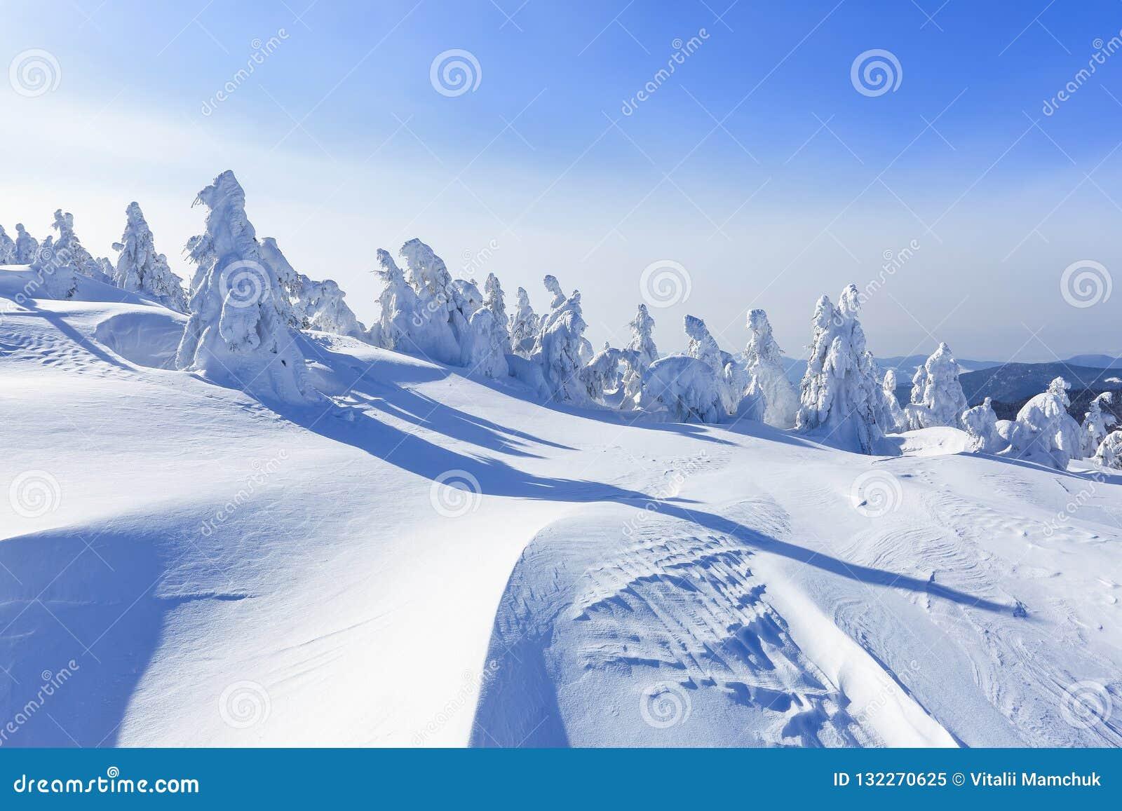 Koude de winter zonnige dag Geheimzinnig, geheim, fantastisch, wereld van bergen Op het gazon met sneeuw de aardige bomen wordt b