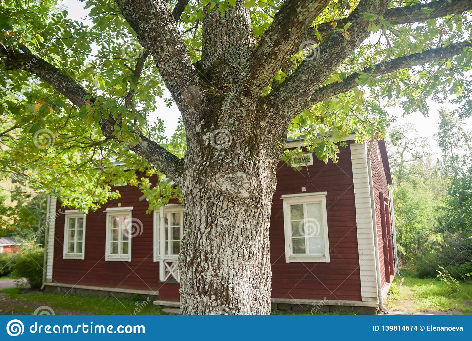 KOUVOLA FINLAND - SEPTEMBER 20, 2018: Härligt rött gammalt trähus och stort träd på territoriet av det Anjala säterit