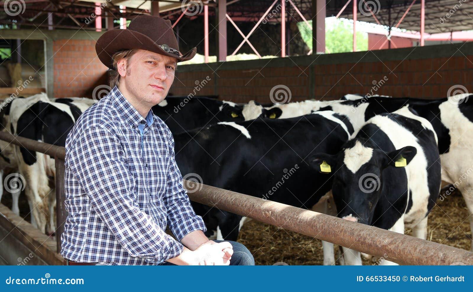 Kowboj i krowy