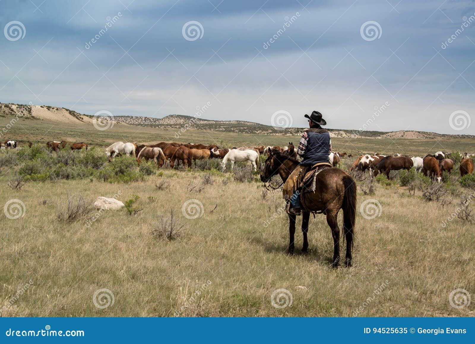 Kowbojski robotnik na ranczo na końskim dopatrywaniu nad stadem konie na prerii