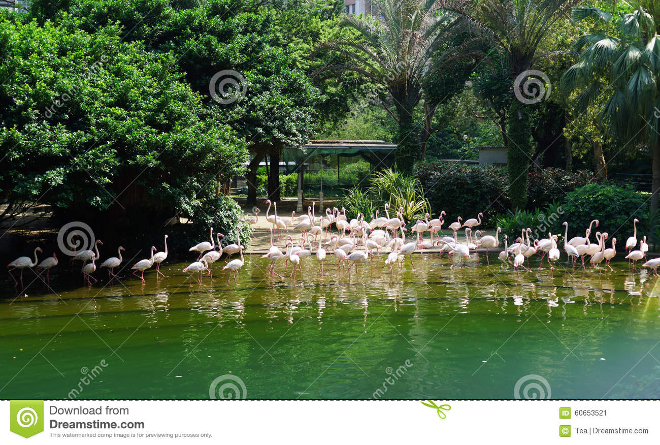 HONG KONG - APRIL 16, 2015: pound with birds in Kowloon Park. Kowloon ...