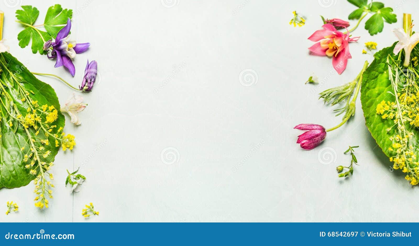 Kräuterhintergrund mit Sommer- oder Frühlingsgartenblumen und Anlage, Rahmen