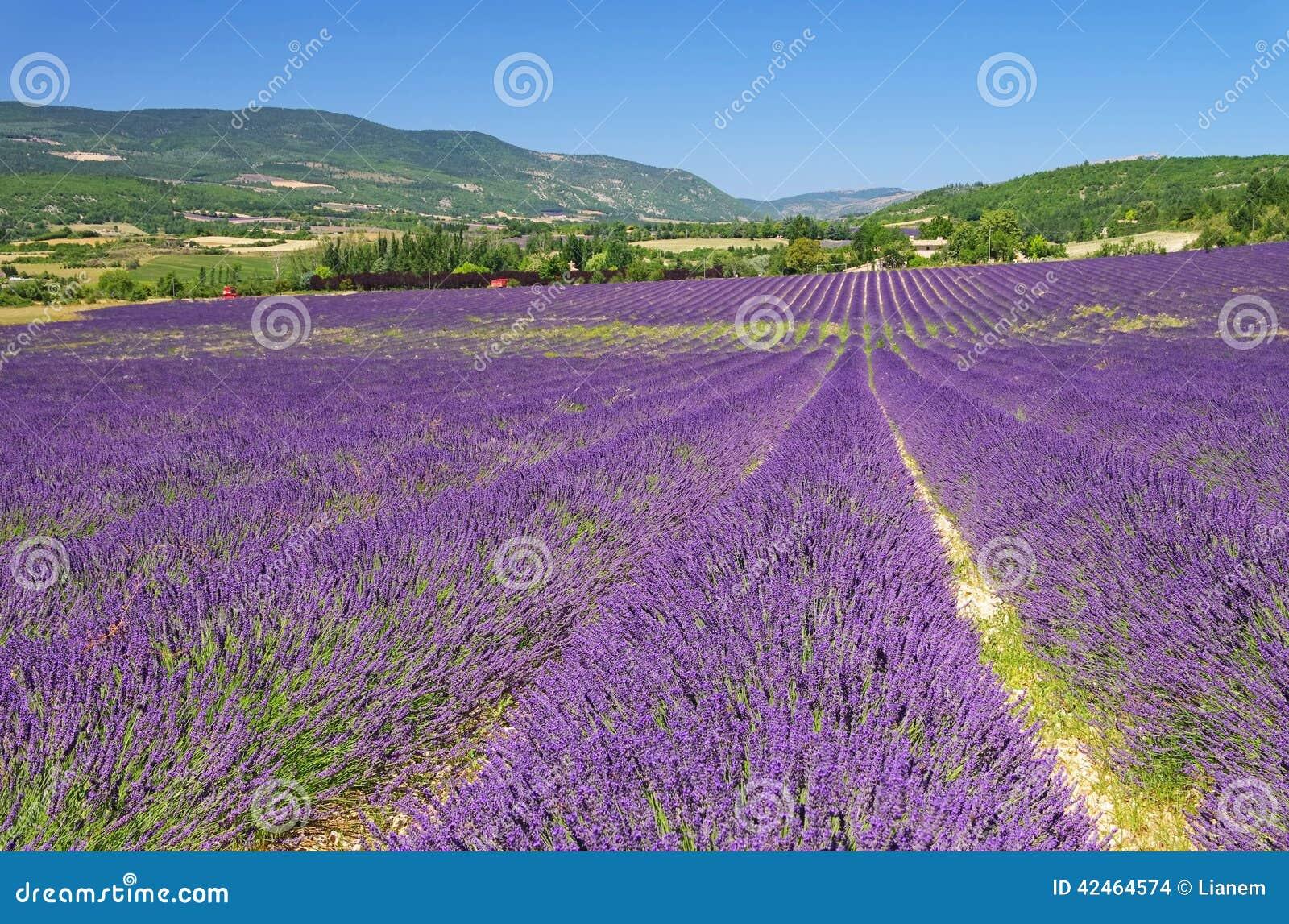 Kräuterlandschaft der aromatischen Anlage