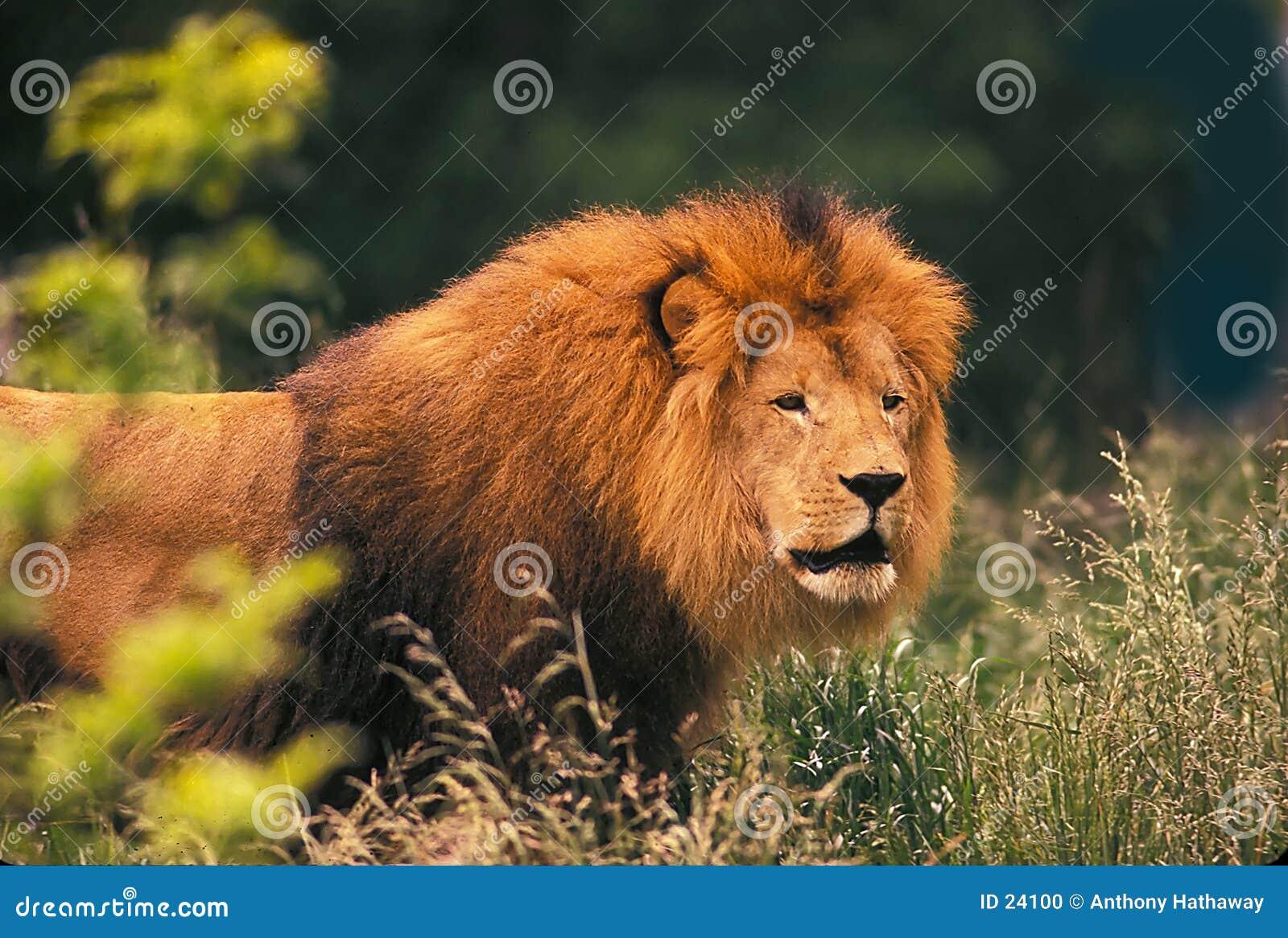 Król bestii