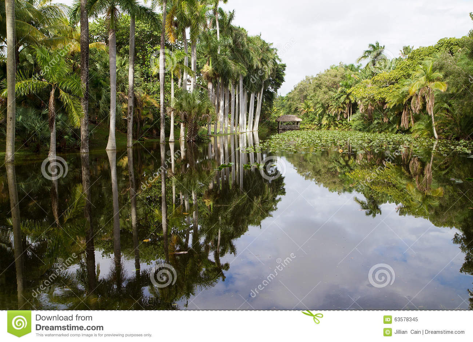 Królewscy drzewka palmowe odbija w czapeczka domu lenieją