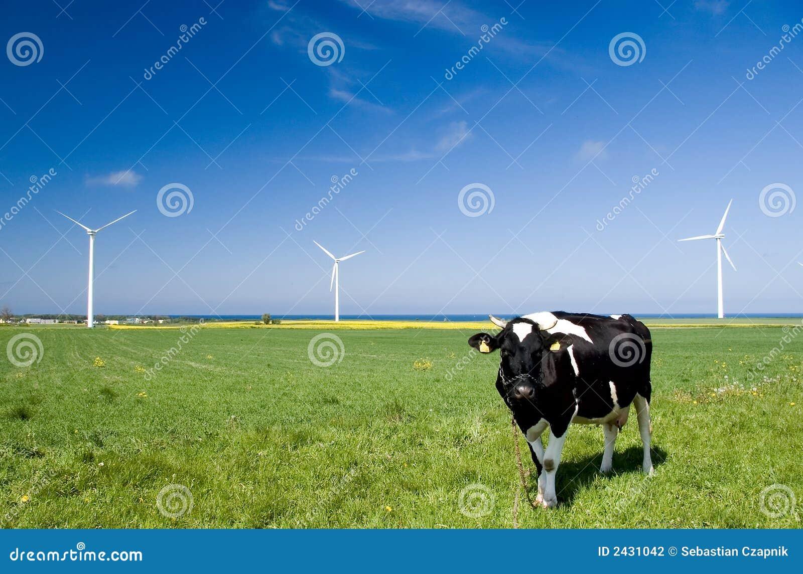 Krów turbiny wiatr