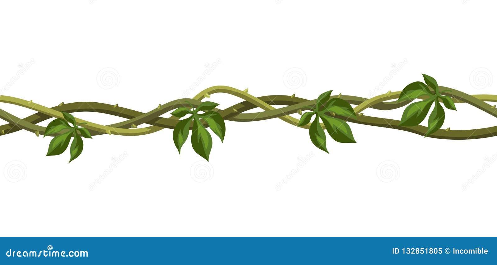 Kręconej dzikiej liany gałąź bezszwowy wzór