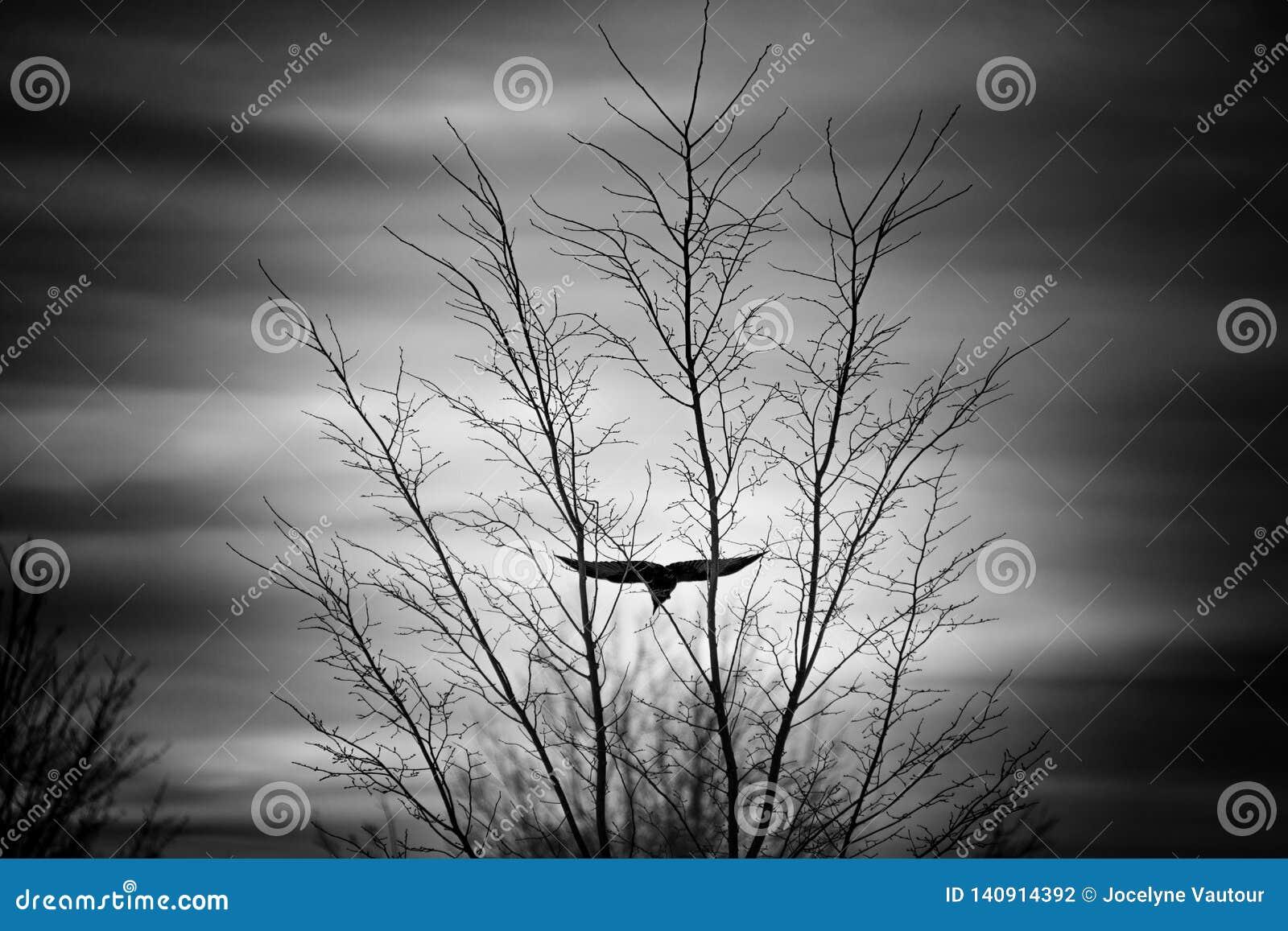 Kraai die voorbij een naakte boom op een koude dalingsdag vliegen