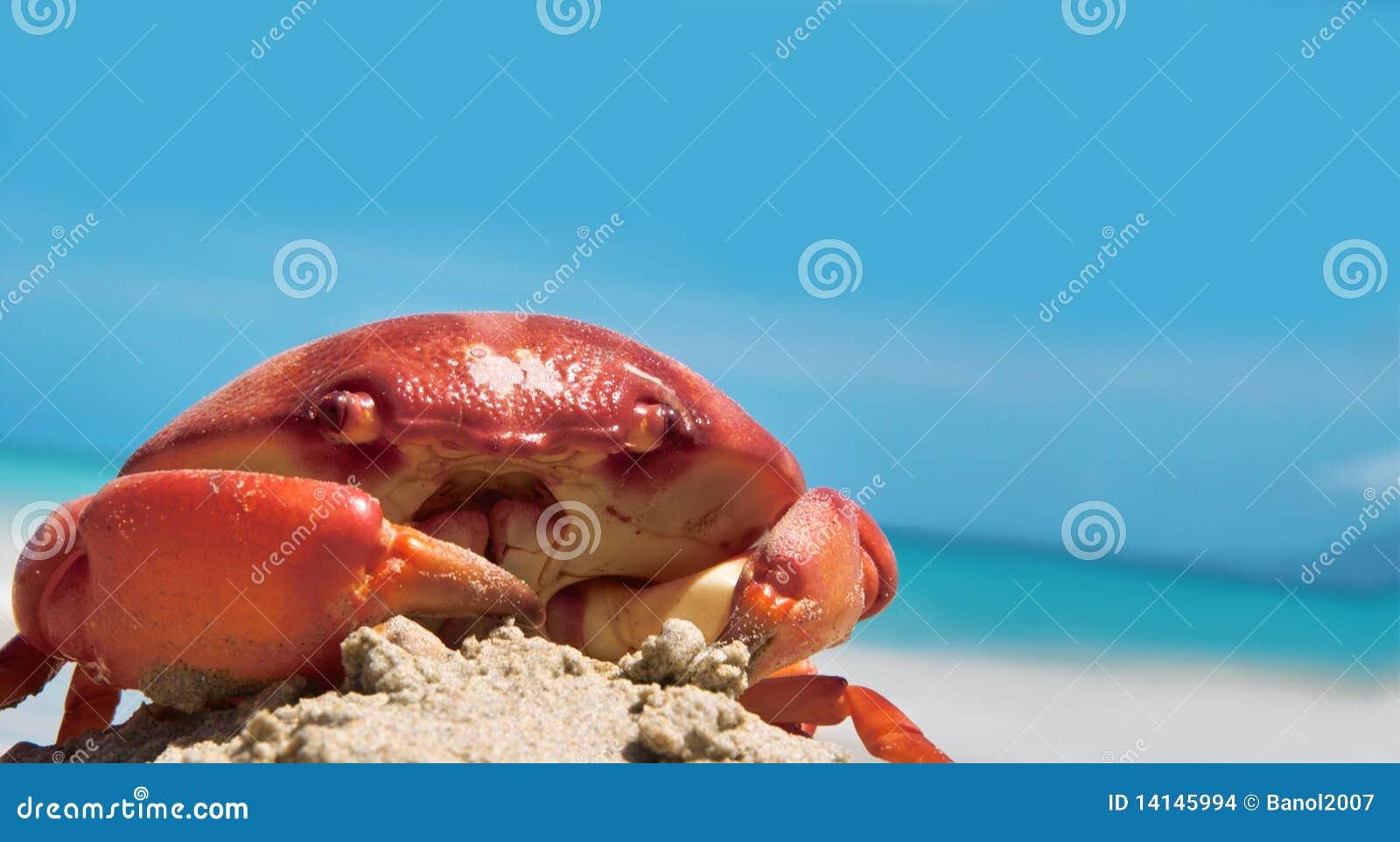 Krab op kust