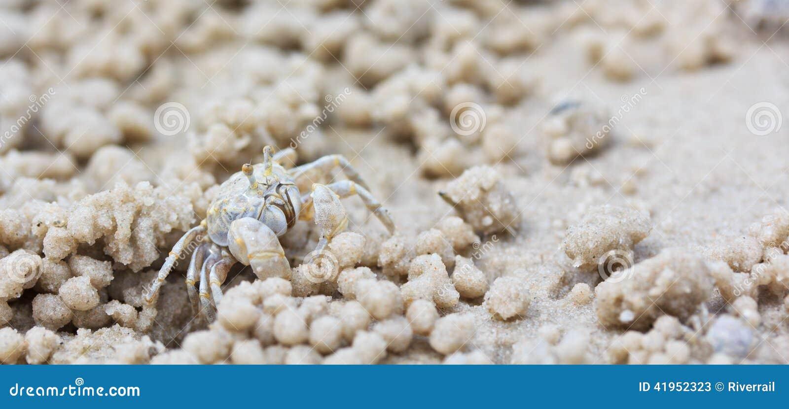 Krab robi piasek piłkom