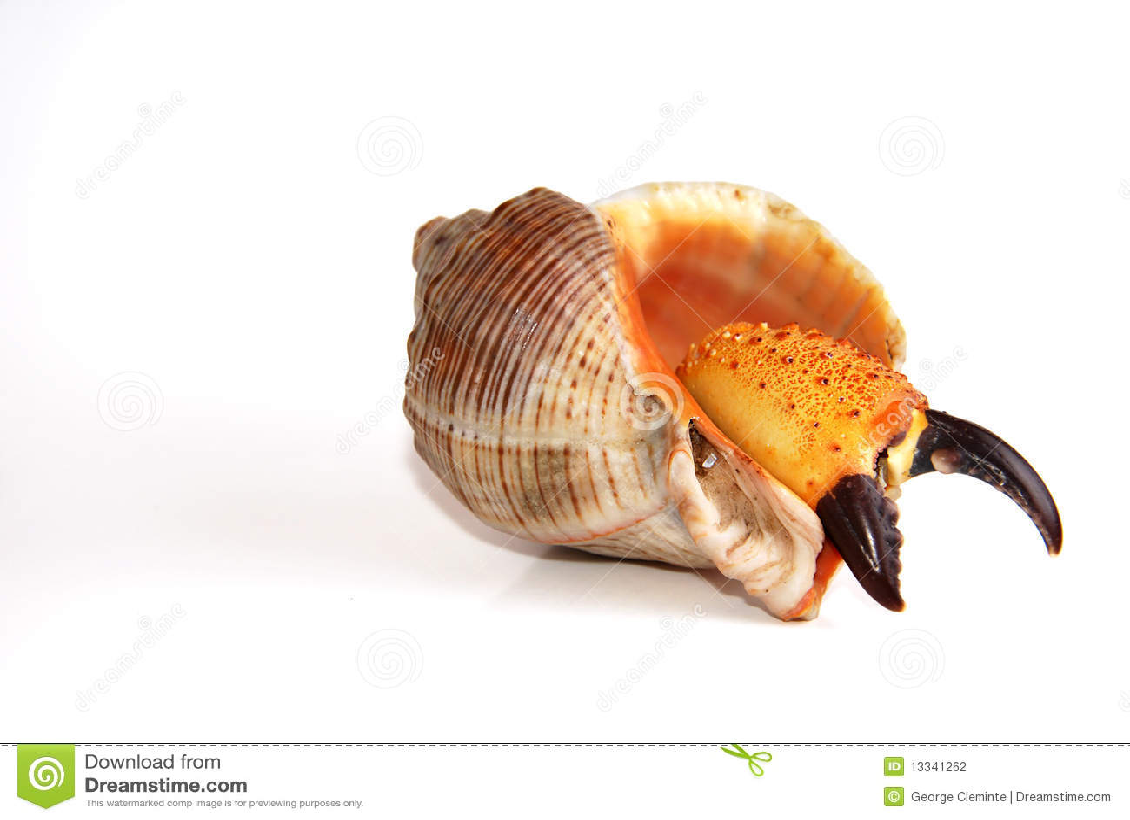 Kraba inside skorupa