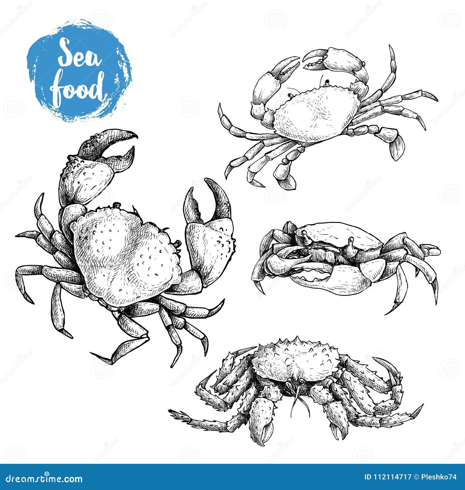 Krabban skissar uppsättningen Hand dragen samling av skaldjur klar vektor för nedladdningillustrationbild