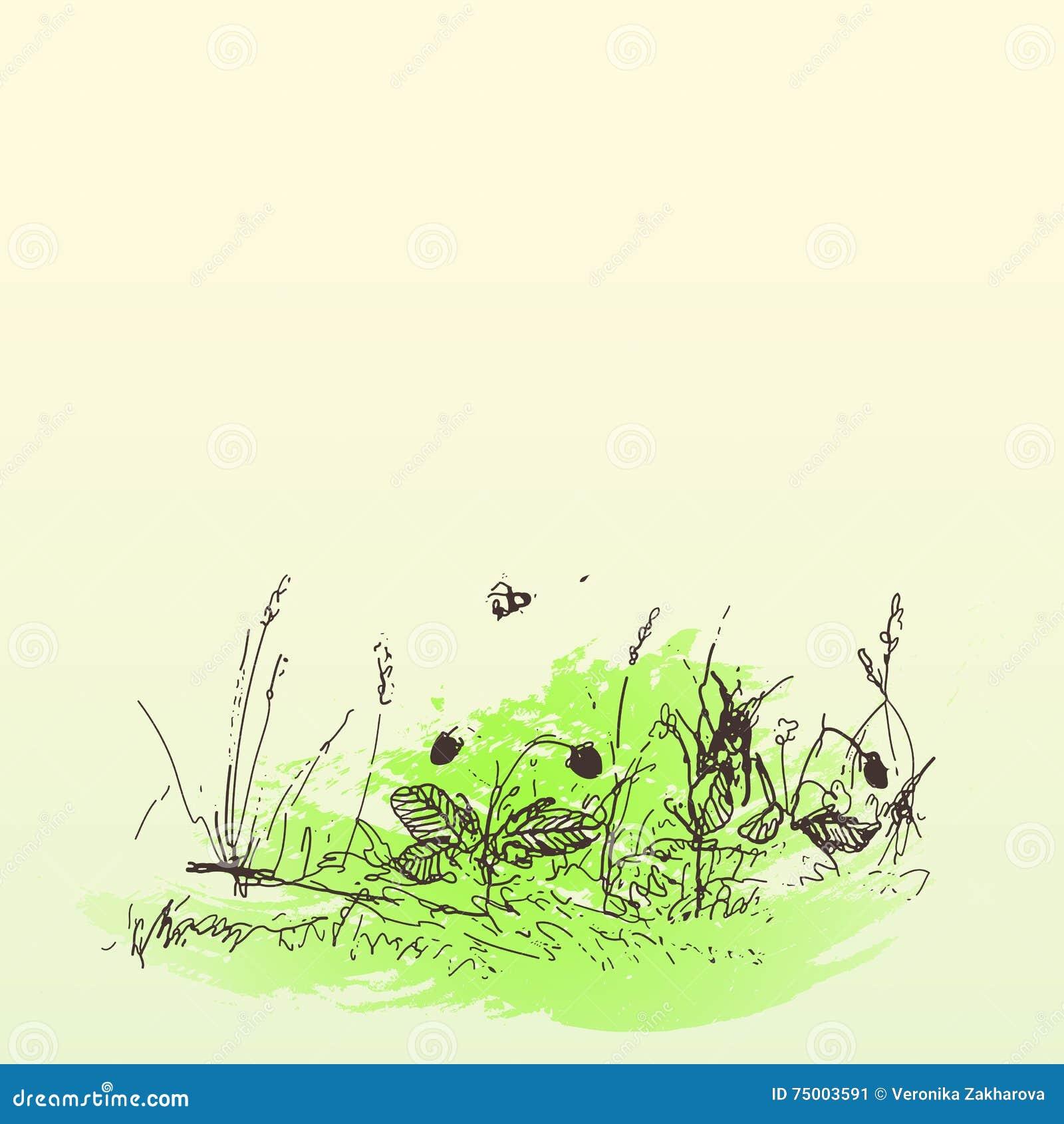 Krabbelhand getrokken bloemen en bessen, waterverfachtergrond Gras, aardbei