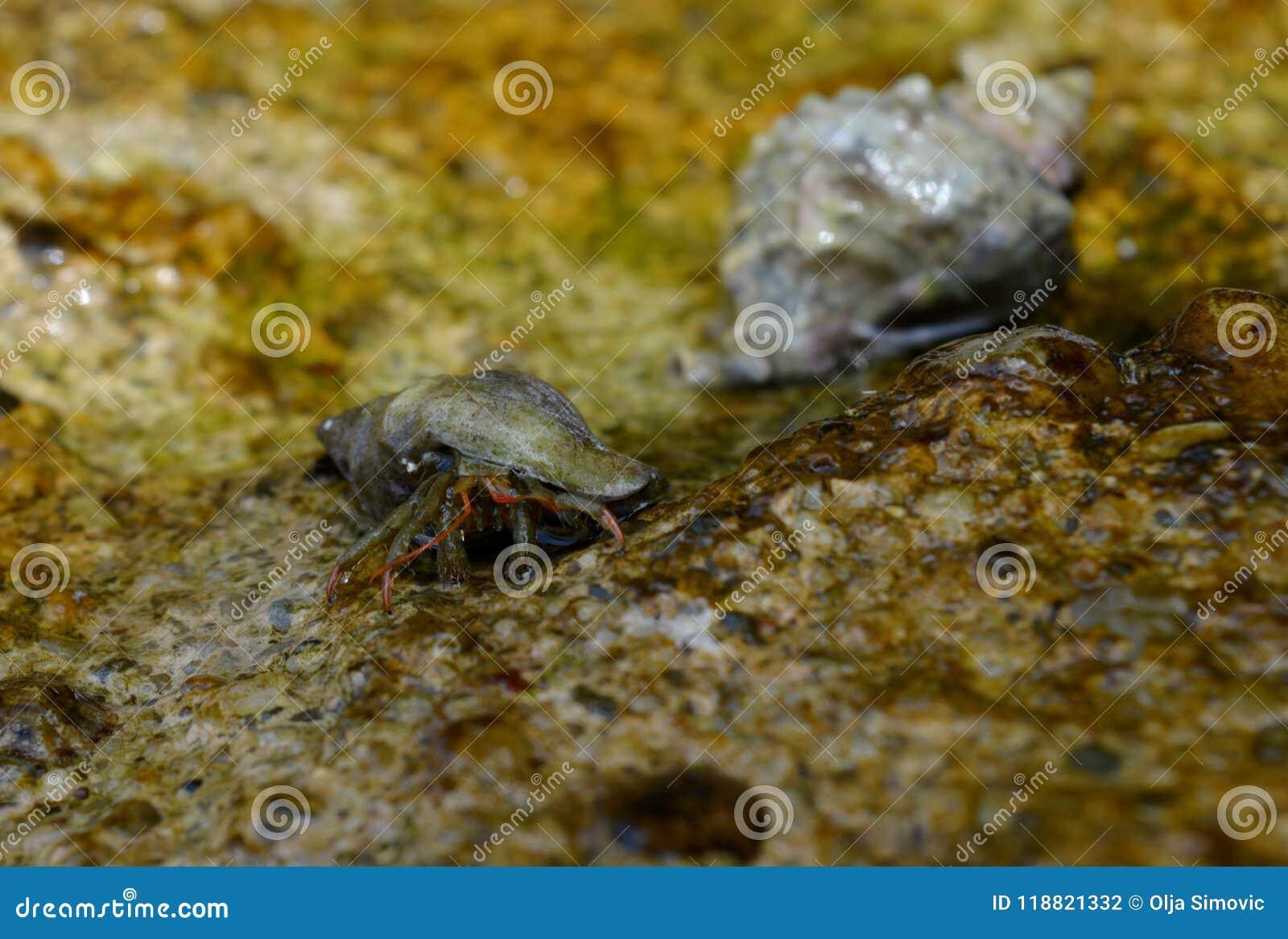 Krabben op de rots