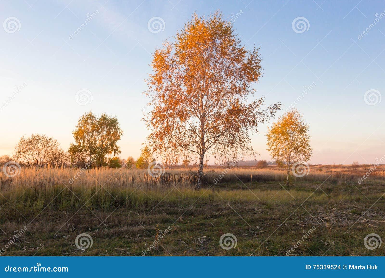 Krajobraz jesieni drzewa z kolorem żółtym i pomarańcze opuszcza w polu