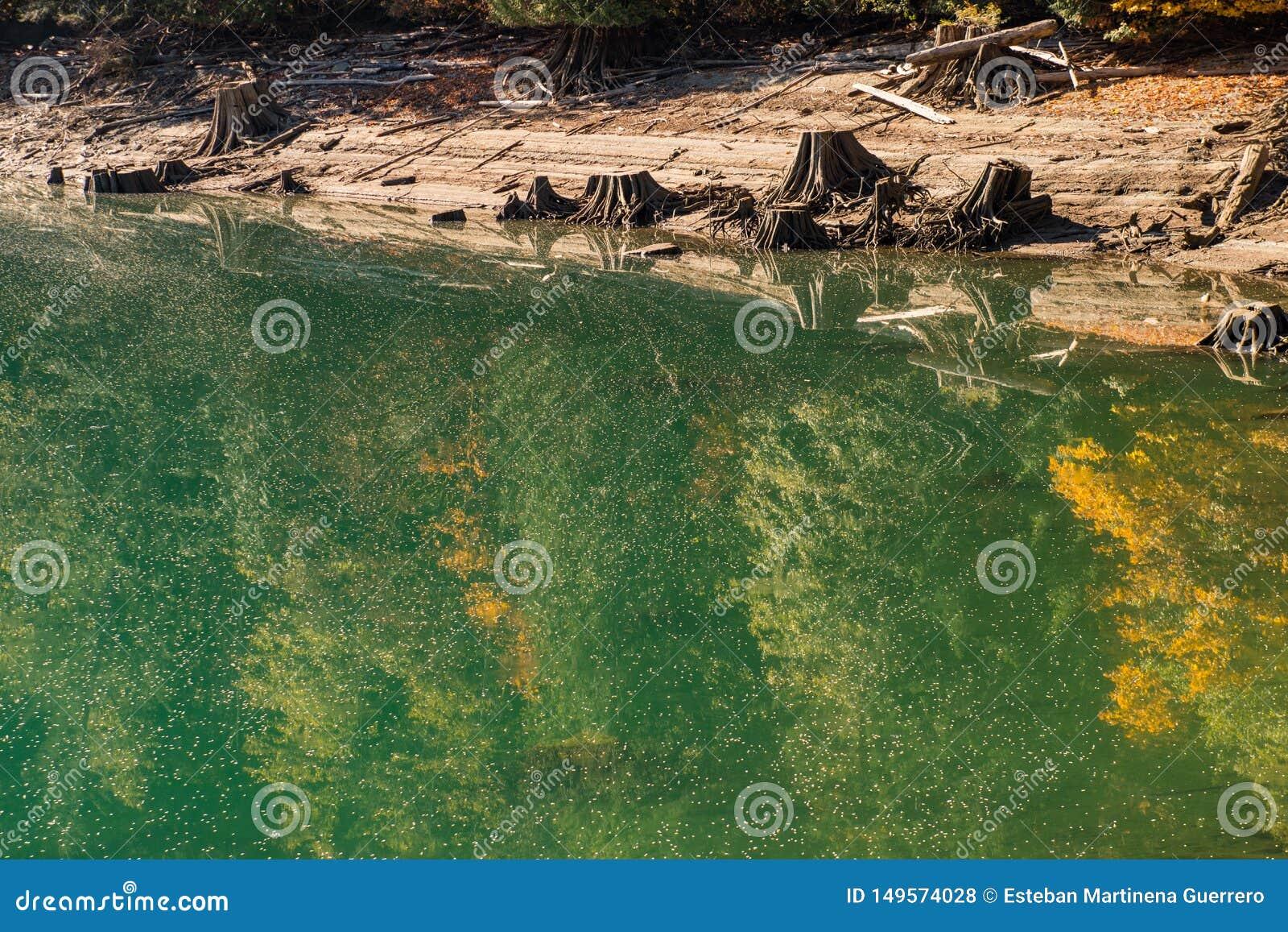Krajobraz Piekarniana jezioro woda zakrywająca z pollen i spadać drzew ziarnami w Północnych kaskadach,