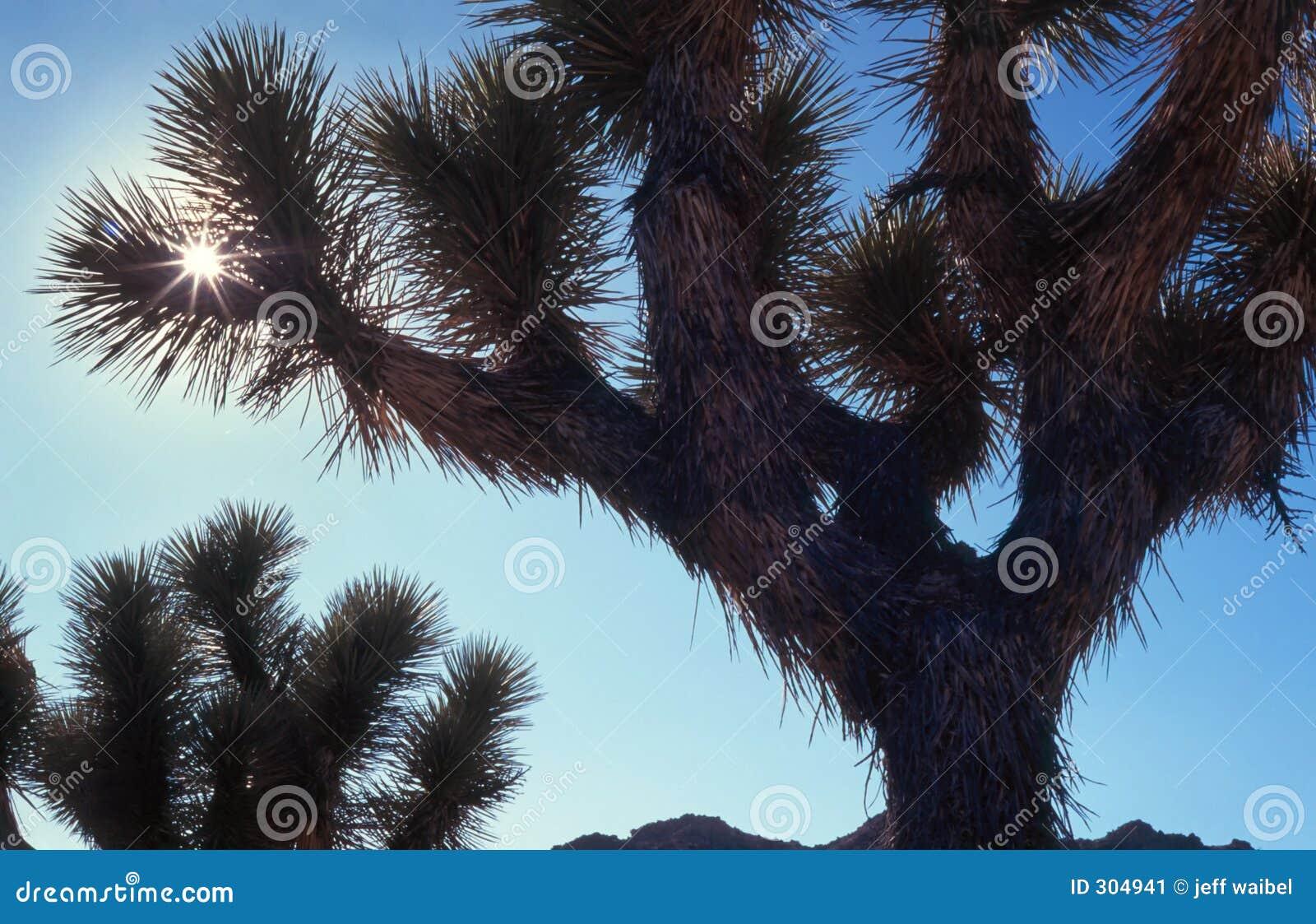 Krajobraz pustynny scorch słońce