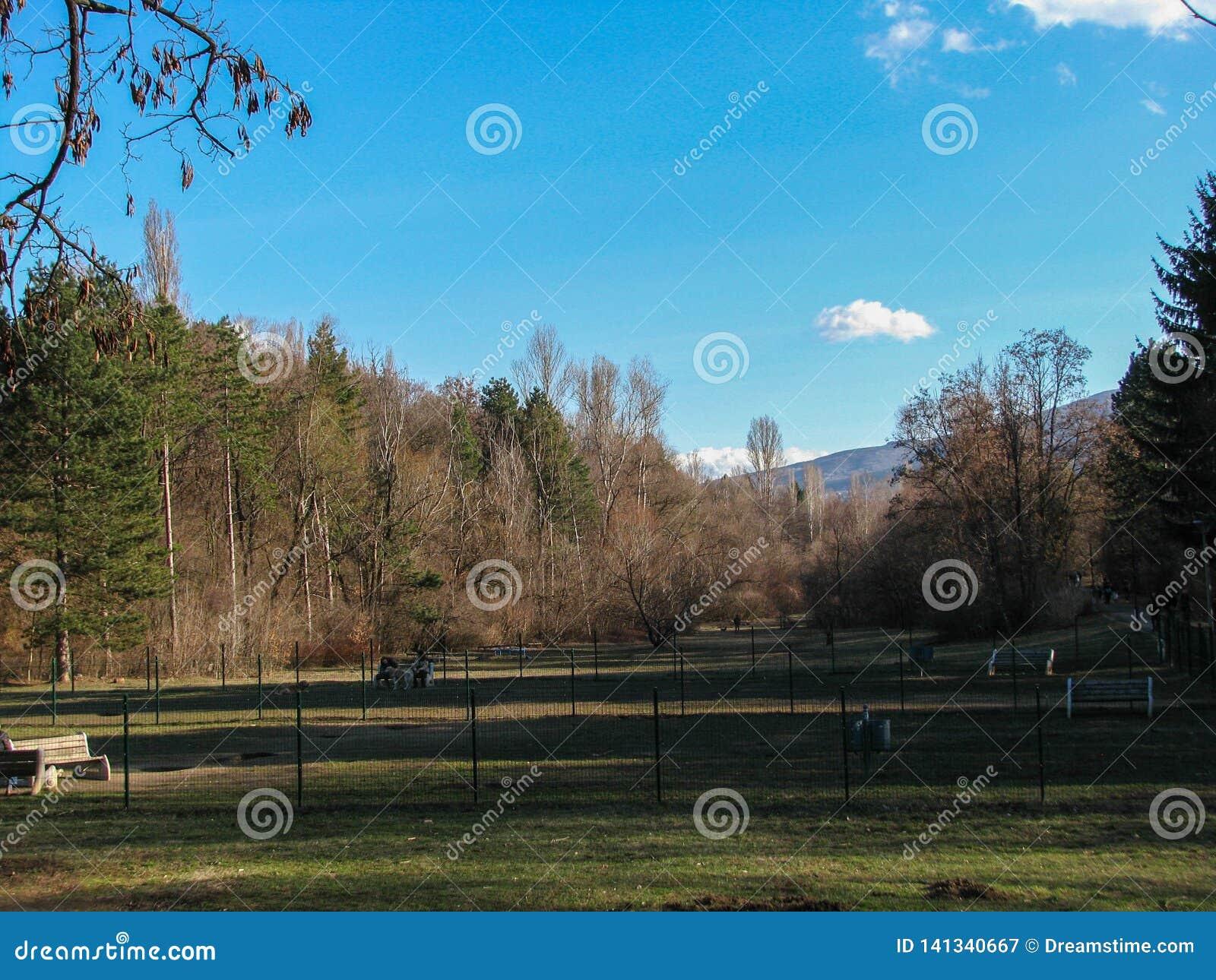 Krajobraz strzelający z pięknym niebieskim niebem