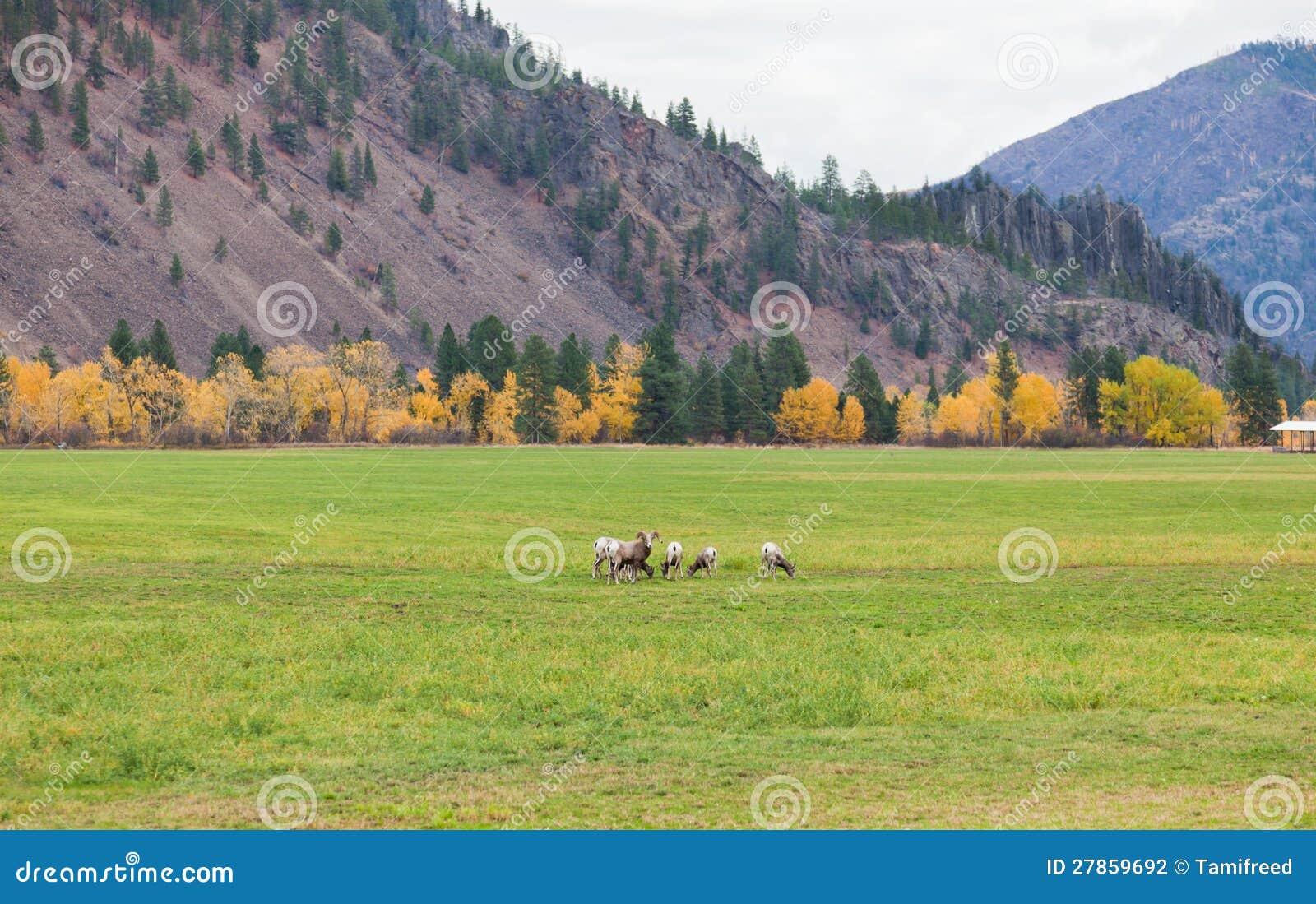 Krajobraz z Baranami