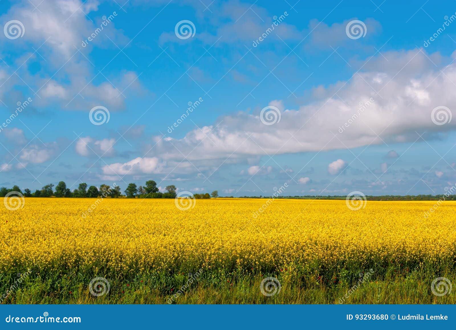 Krajobraz z rapeseed kwiatami