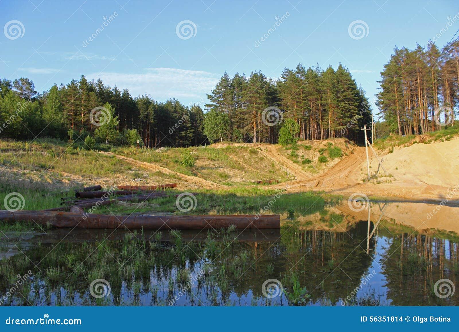 Krajobraz z sosnowym lasem
