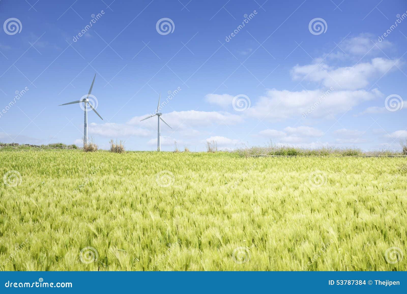 Krajobraz zielony jęczmienia pole