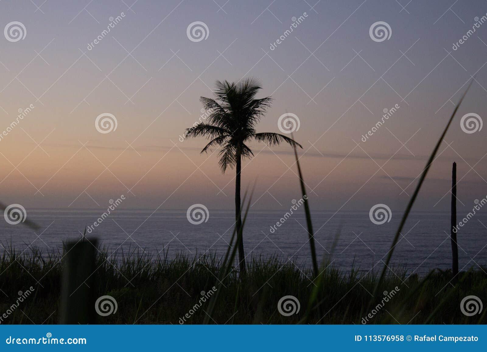 Krajobrazowa fotografia z roślinami, kokosowym drzewem w przedpolu i plażą w tle