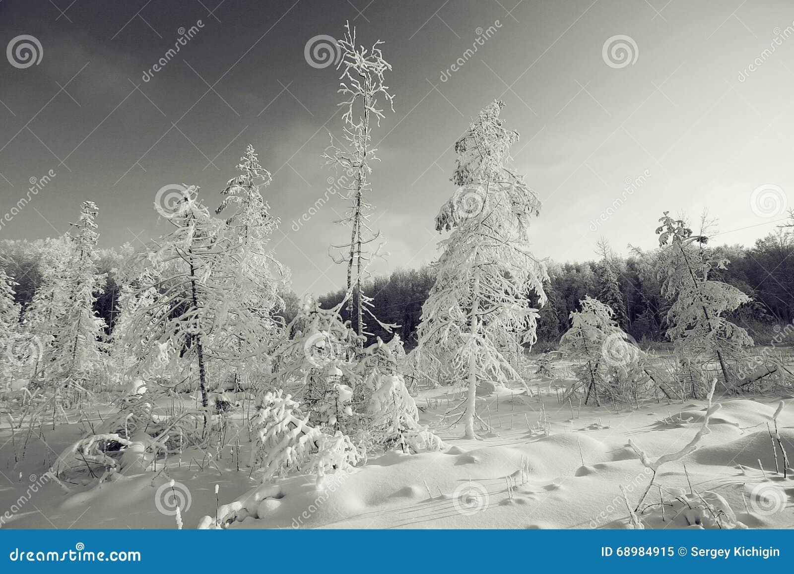 Krajobrazowa monochromatyczna zima