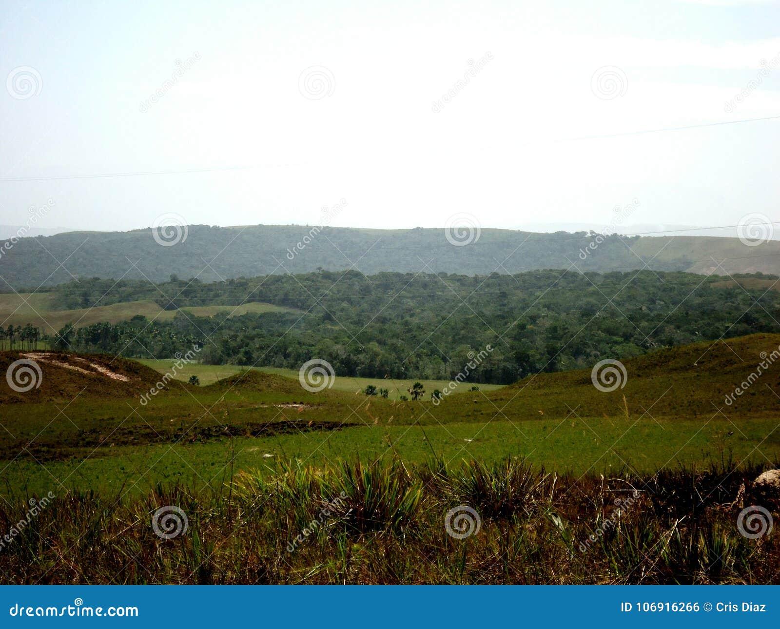 Krajobrazowa parkowa wielka sawanna Amazon Wenezuela
