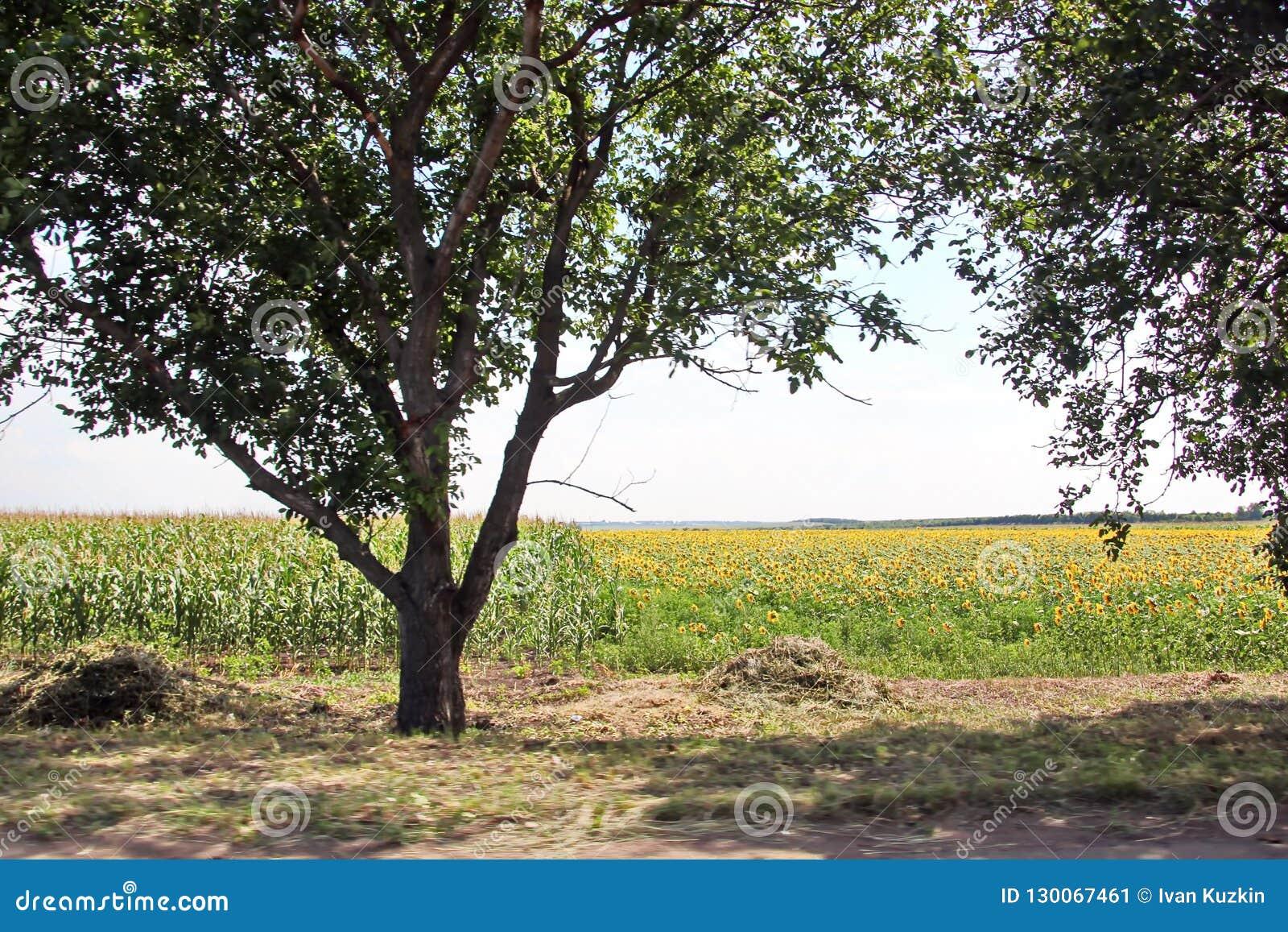 Krajobrazowi widoki natura, pola, wioski i drogi Ukraina, Widok od samochodowego okno gdy jadący