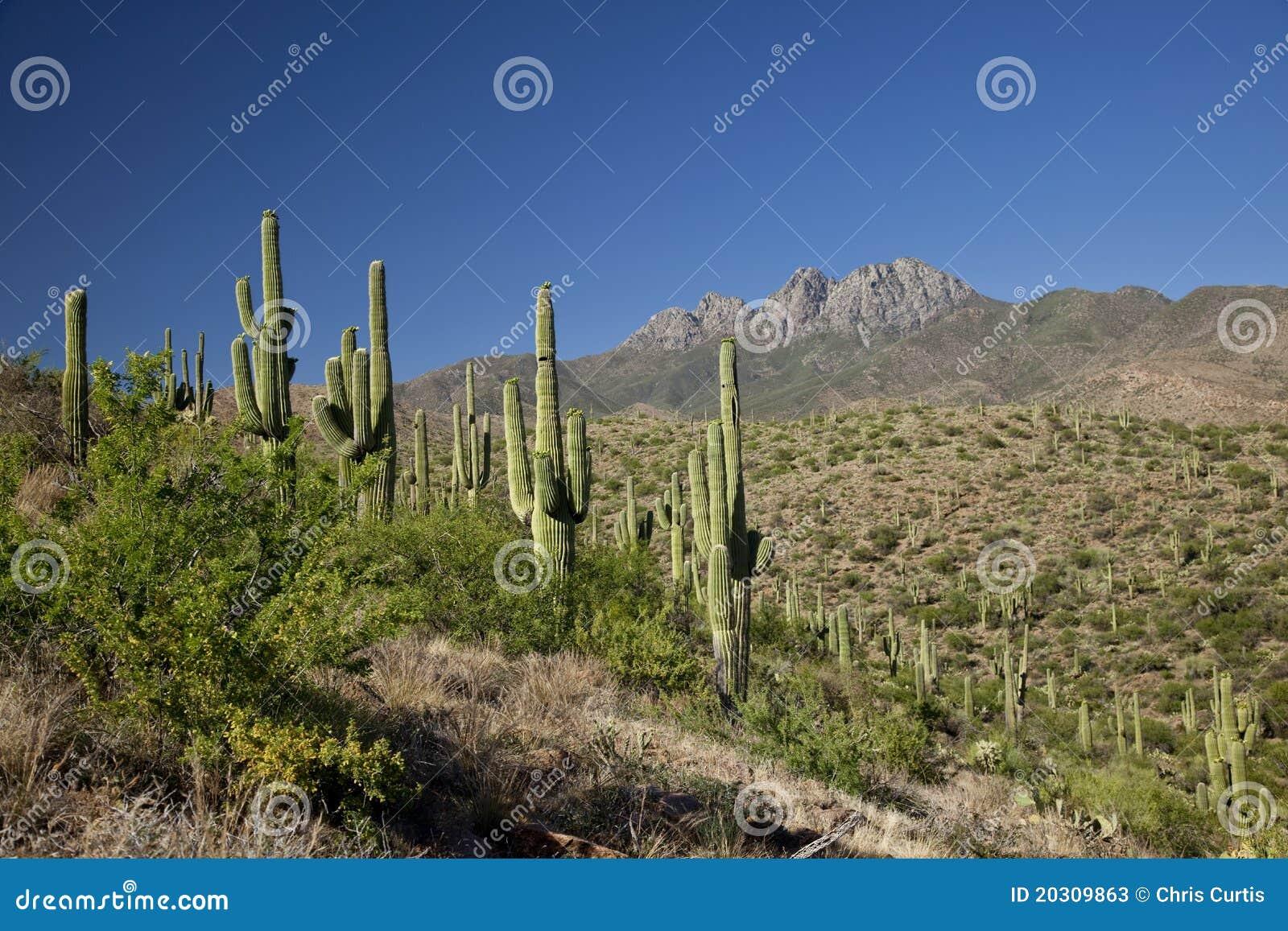 Krajobrazowy Arizona feniks