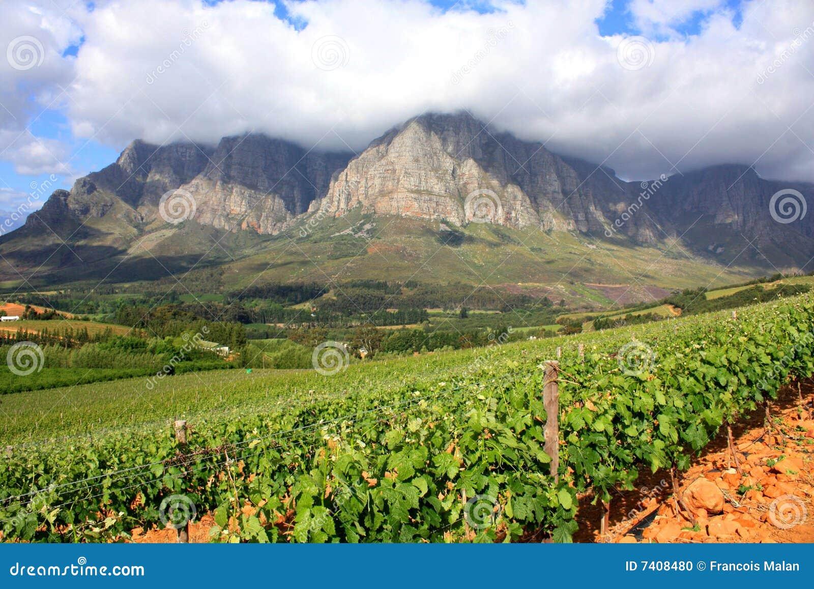 Krajobrazowy halny winnica